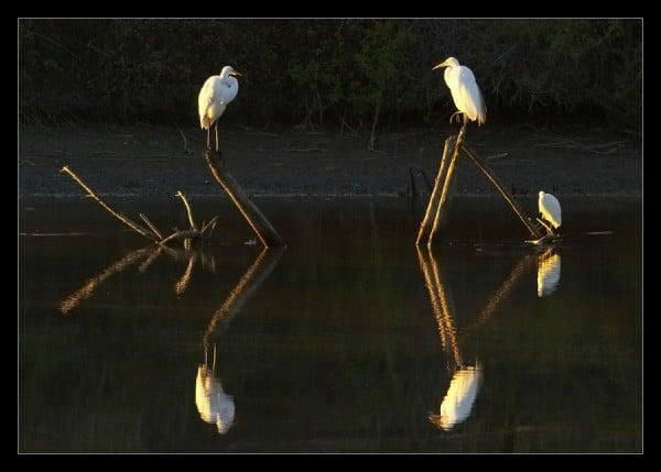 simetrik-kuşlar