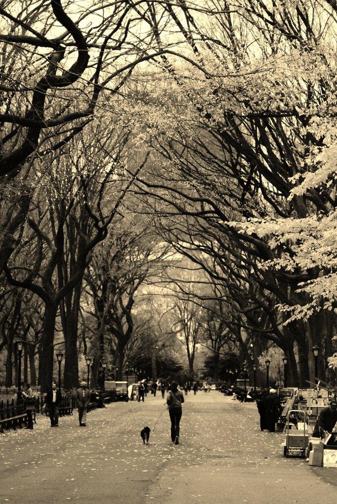 siyah beyaz park