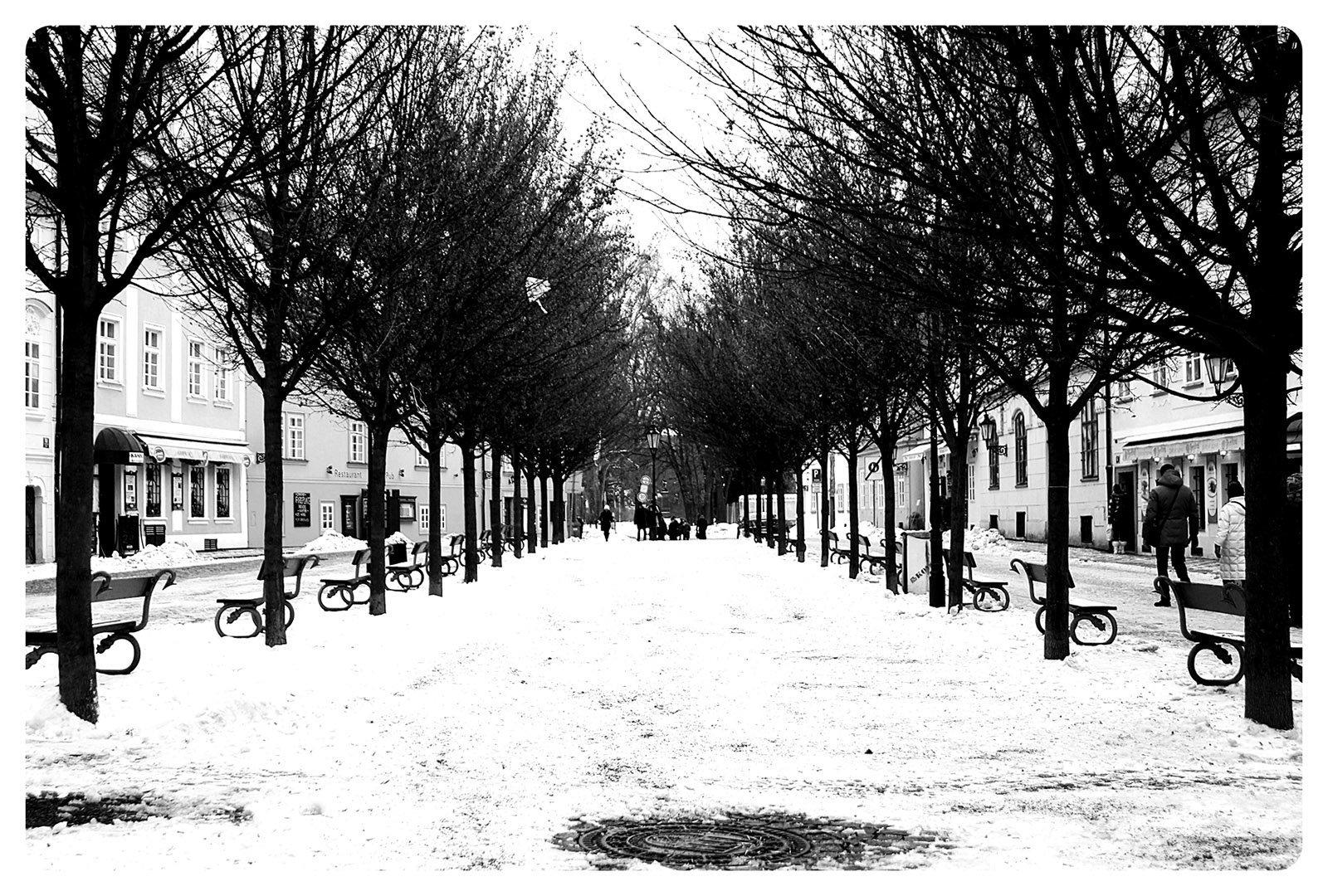 siyah beyaz prag ağaçlar