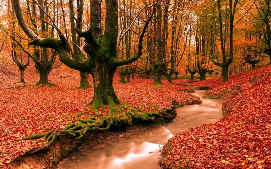 sonbaharın izleri