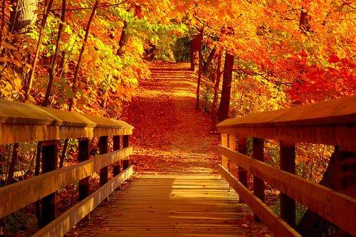 güz ve tahta köprü