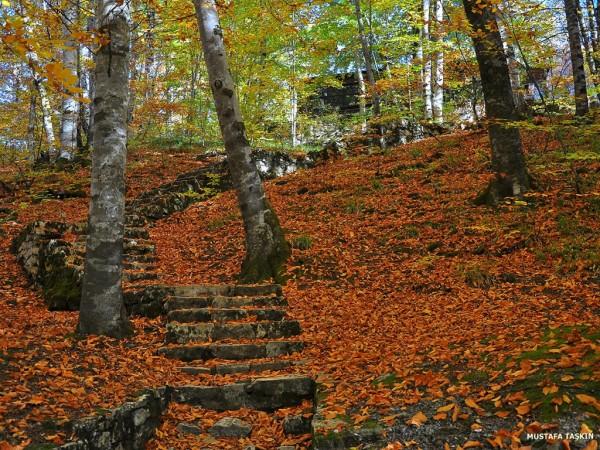 sonbahar yaprakları ve taş merdiven