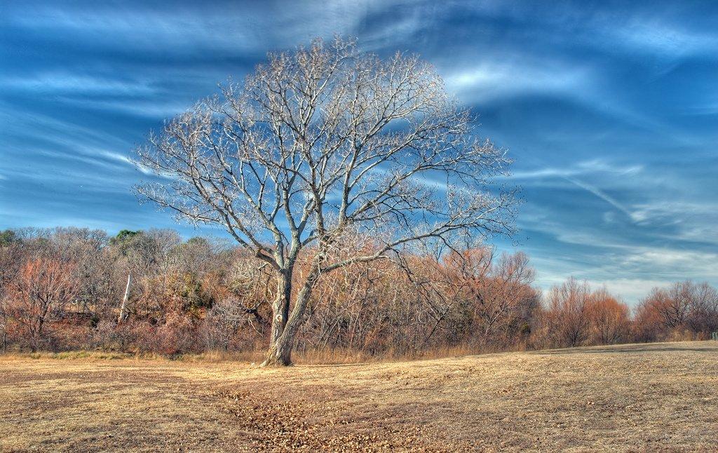 sonbahardaki ağaç