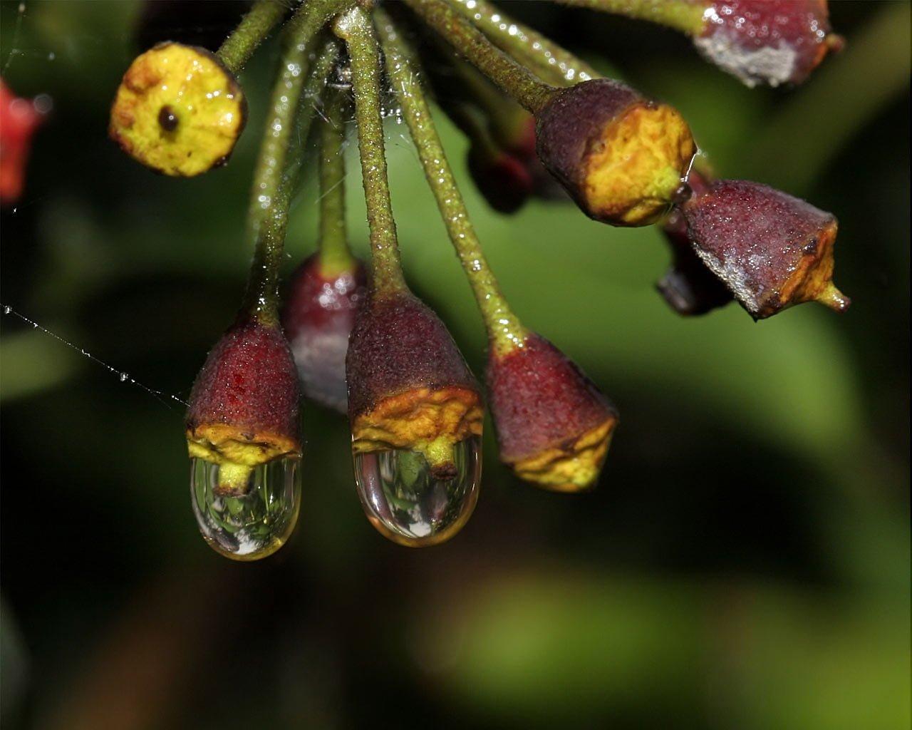 Su damlalı çiçekler-03
