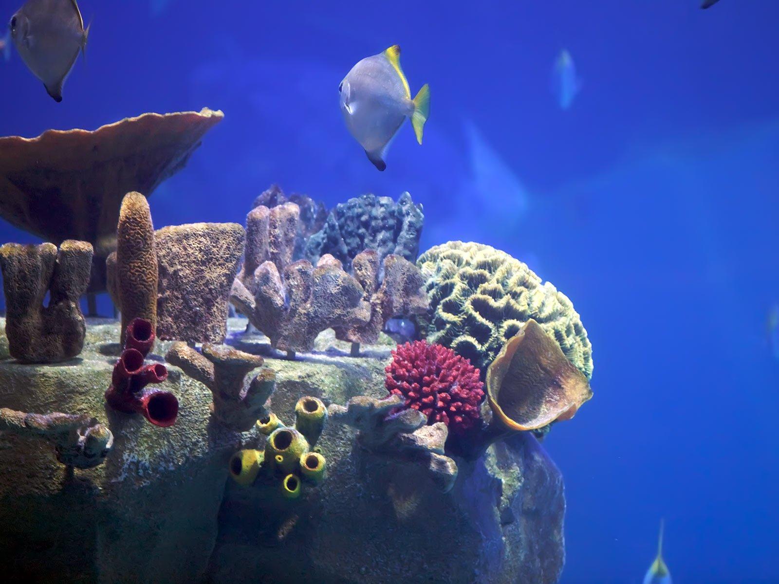 Su altı mercan ve balıkları-1