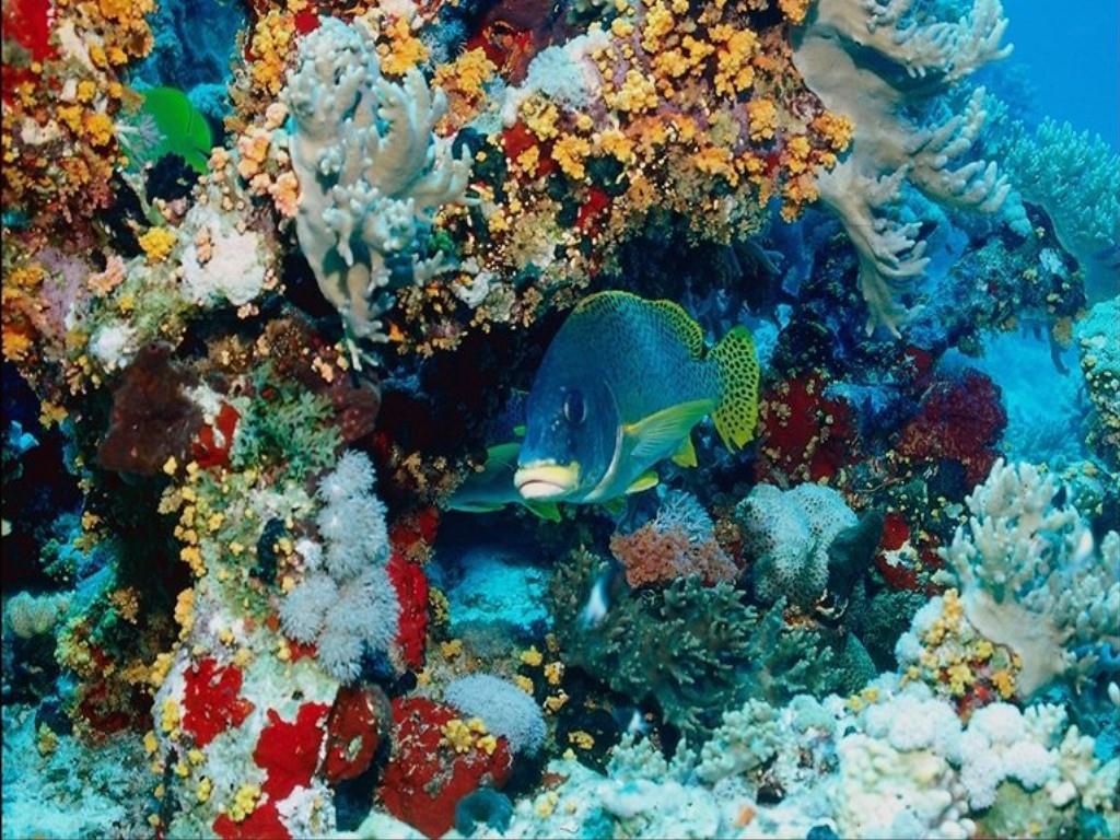 Su altı mercan ve balıkları-2