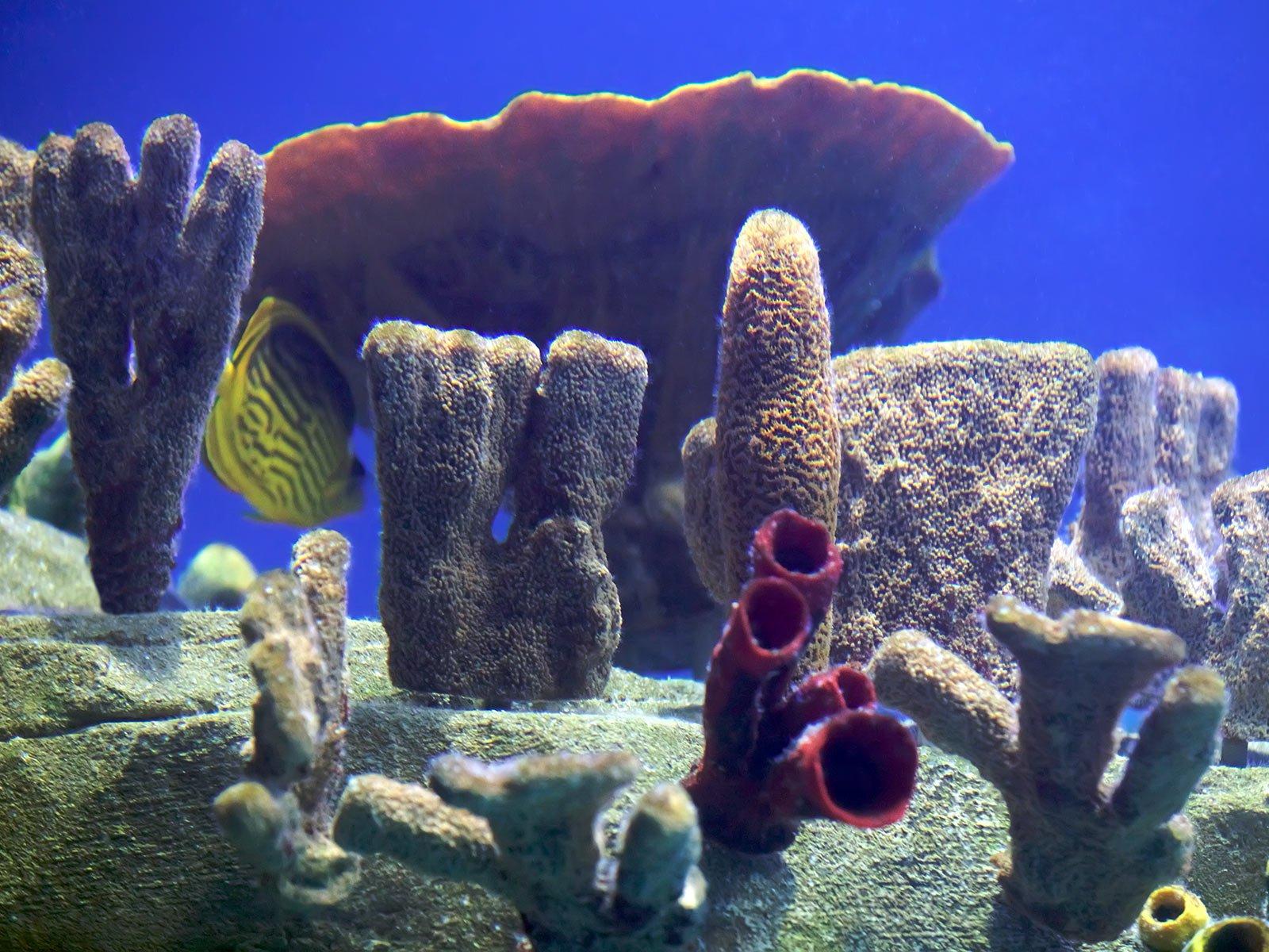Su altı mercan ve balıkları-3