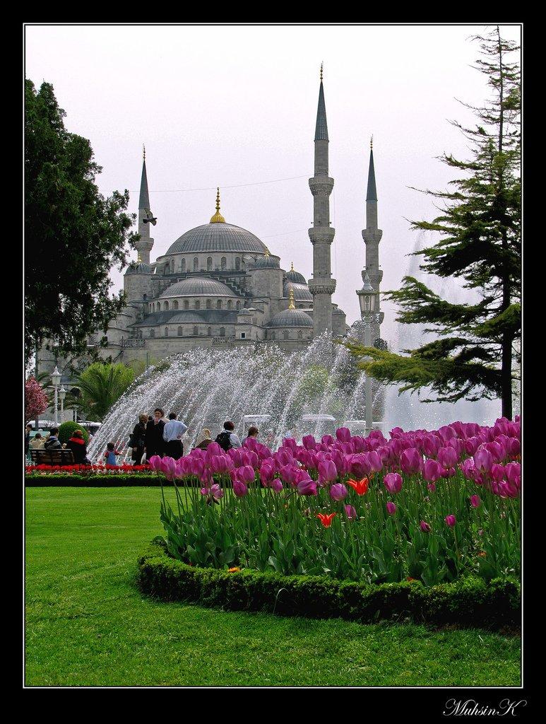 sultanahmet laleler