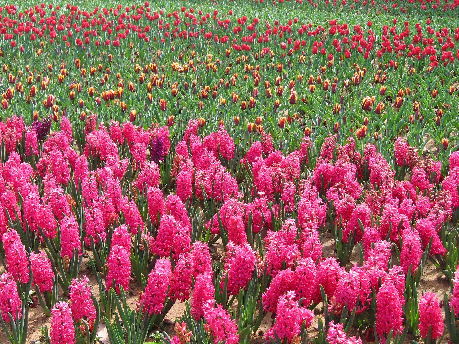 Çiçekli manzaralar-49