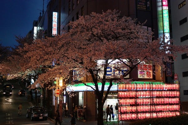 tokyo gece ağaç