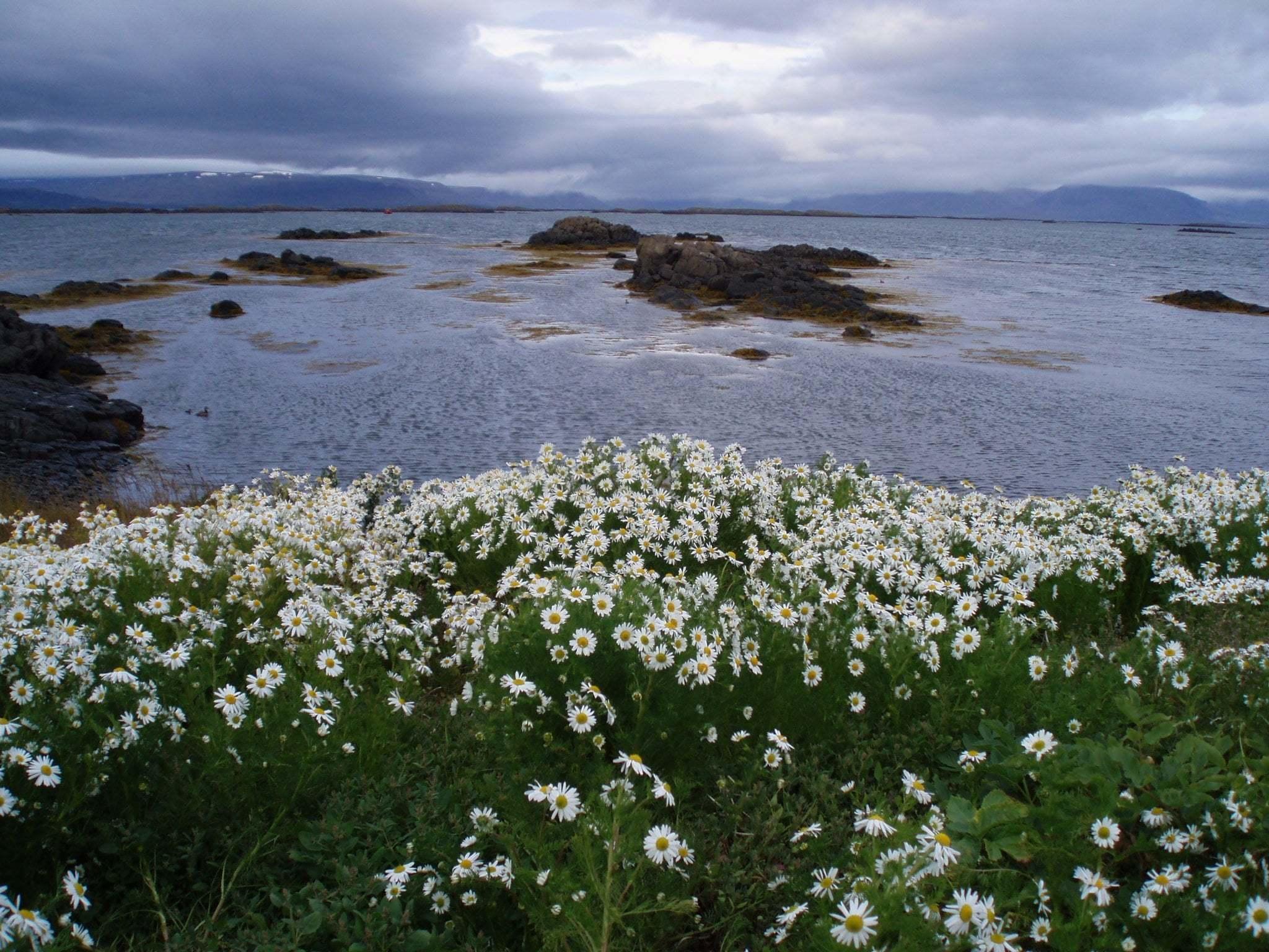 Çiçekli manzaralar-68