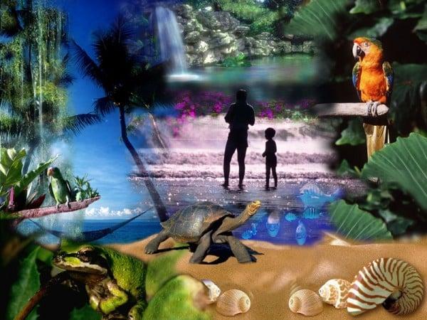 tropikal grafik