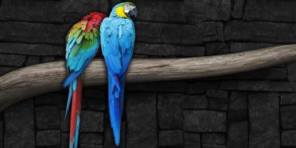 Papağan Twitter Kapak Fotoğrafı