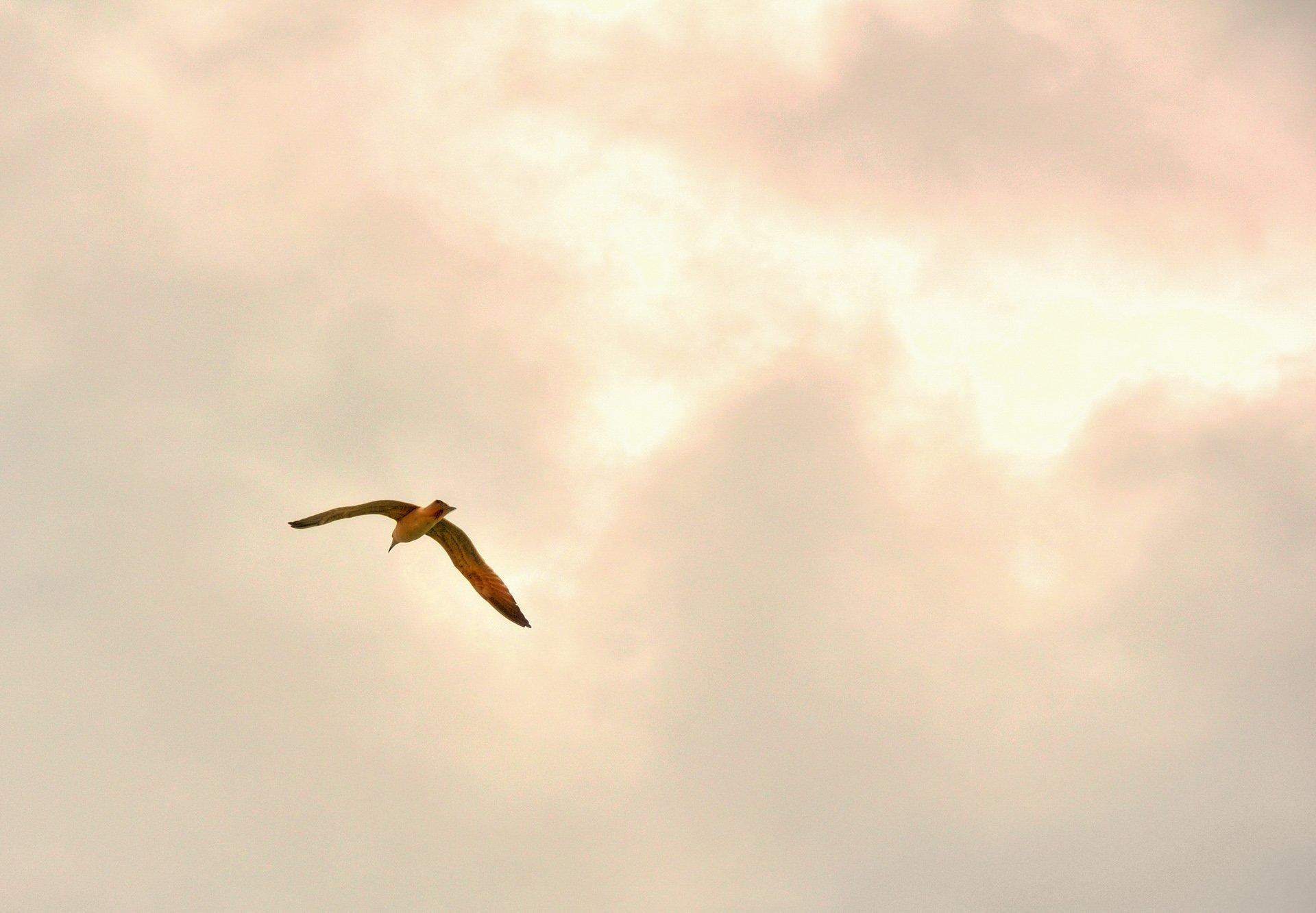 uçan martı
