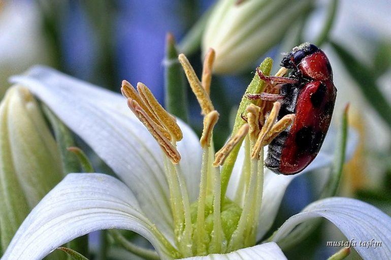 uğur böceği fotoğrafları