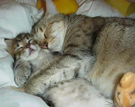 uyuyan kediler