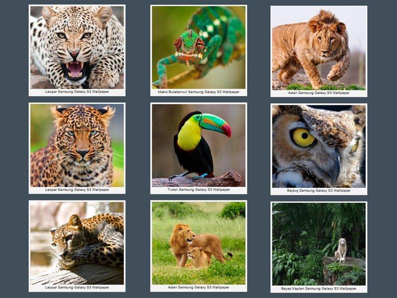Samsung Galaxy S3 Vahşi Hayvanlar Wallpaper