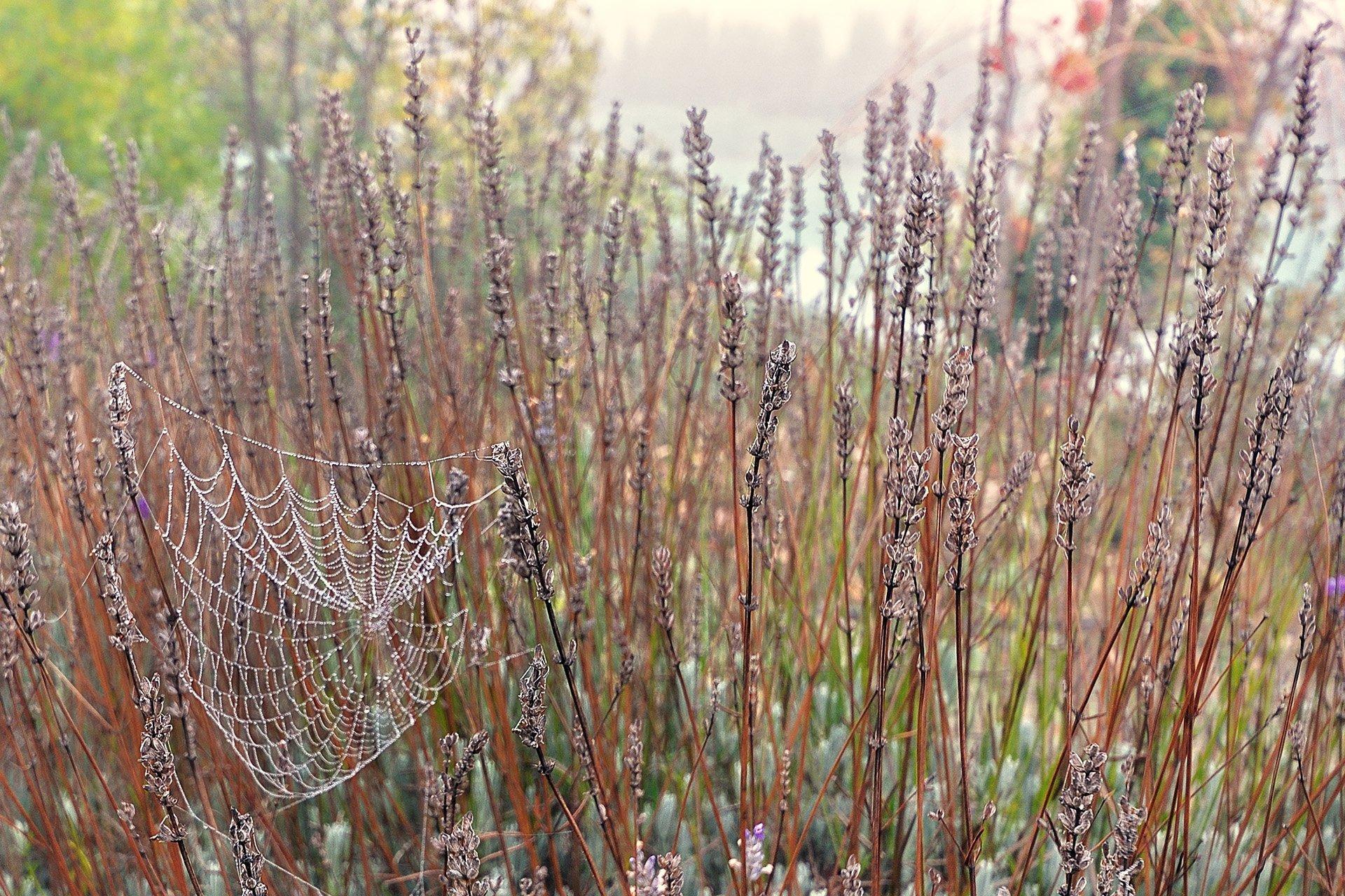 valencia örümcek ağı
