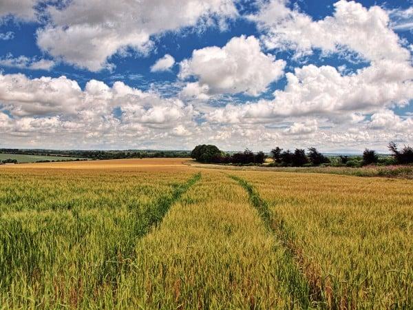 winchester doğal arazi