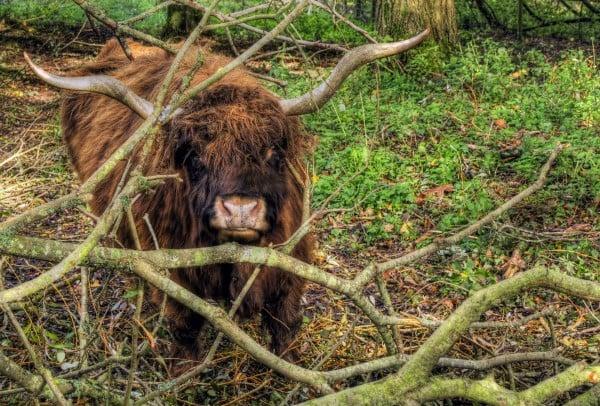 winchester hayvan