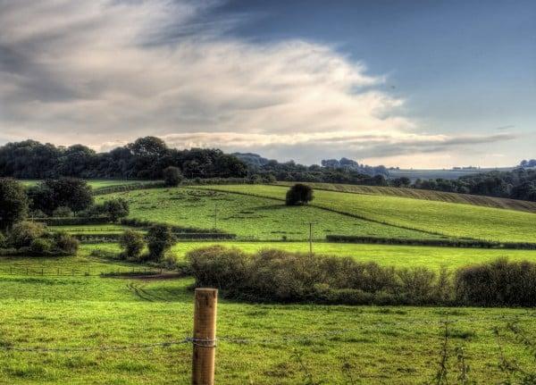 winchester yeşil arazi