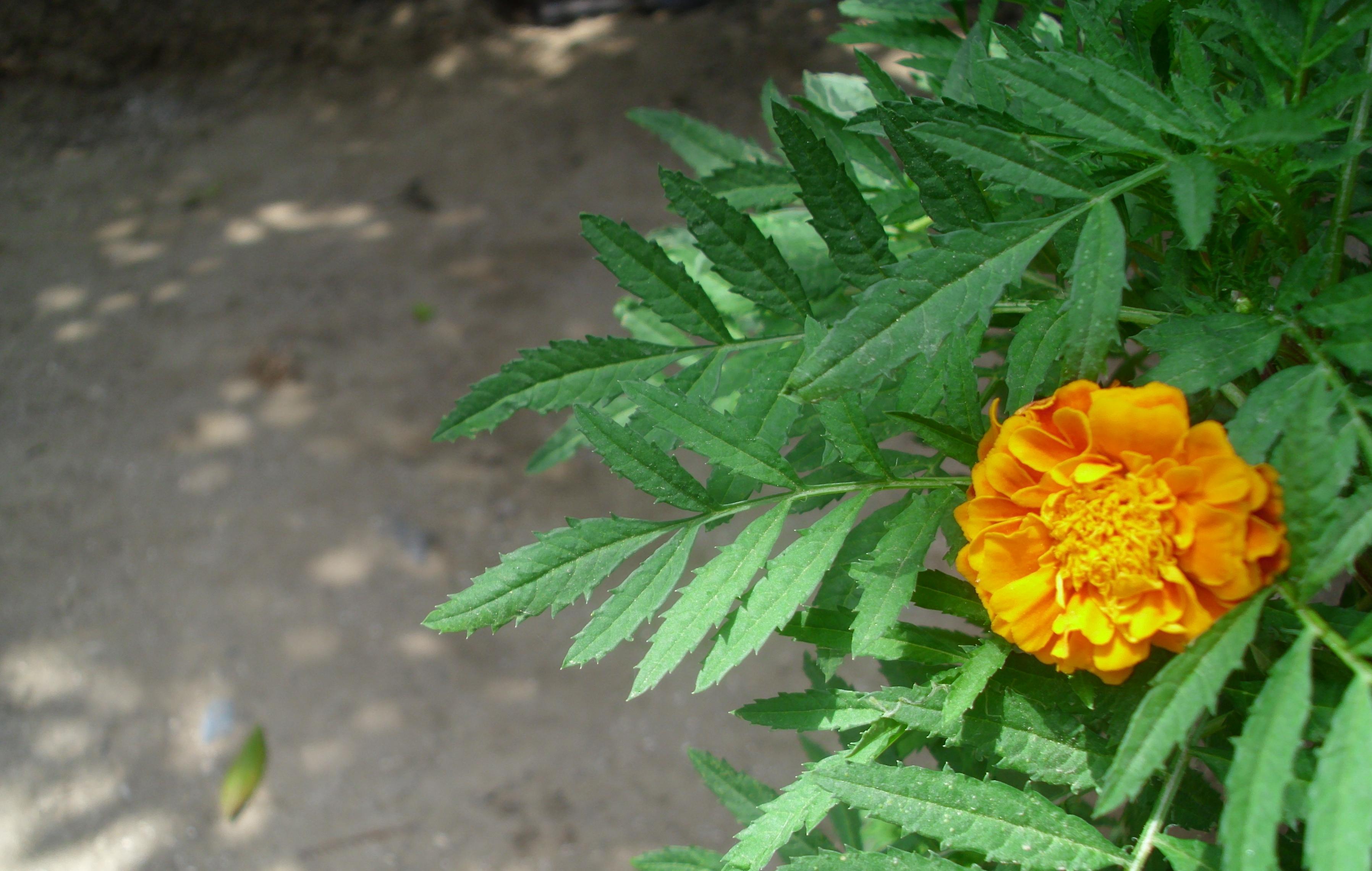 Yakın Çekim Çiçek Resmi