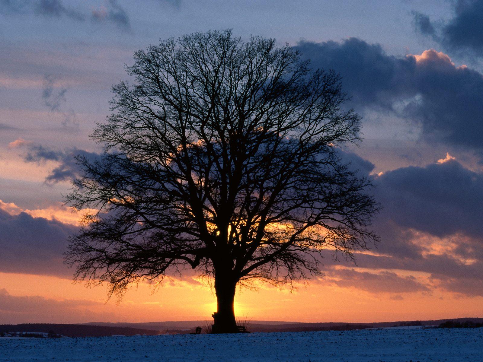 yalnız ağaç resmi