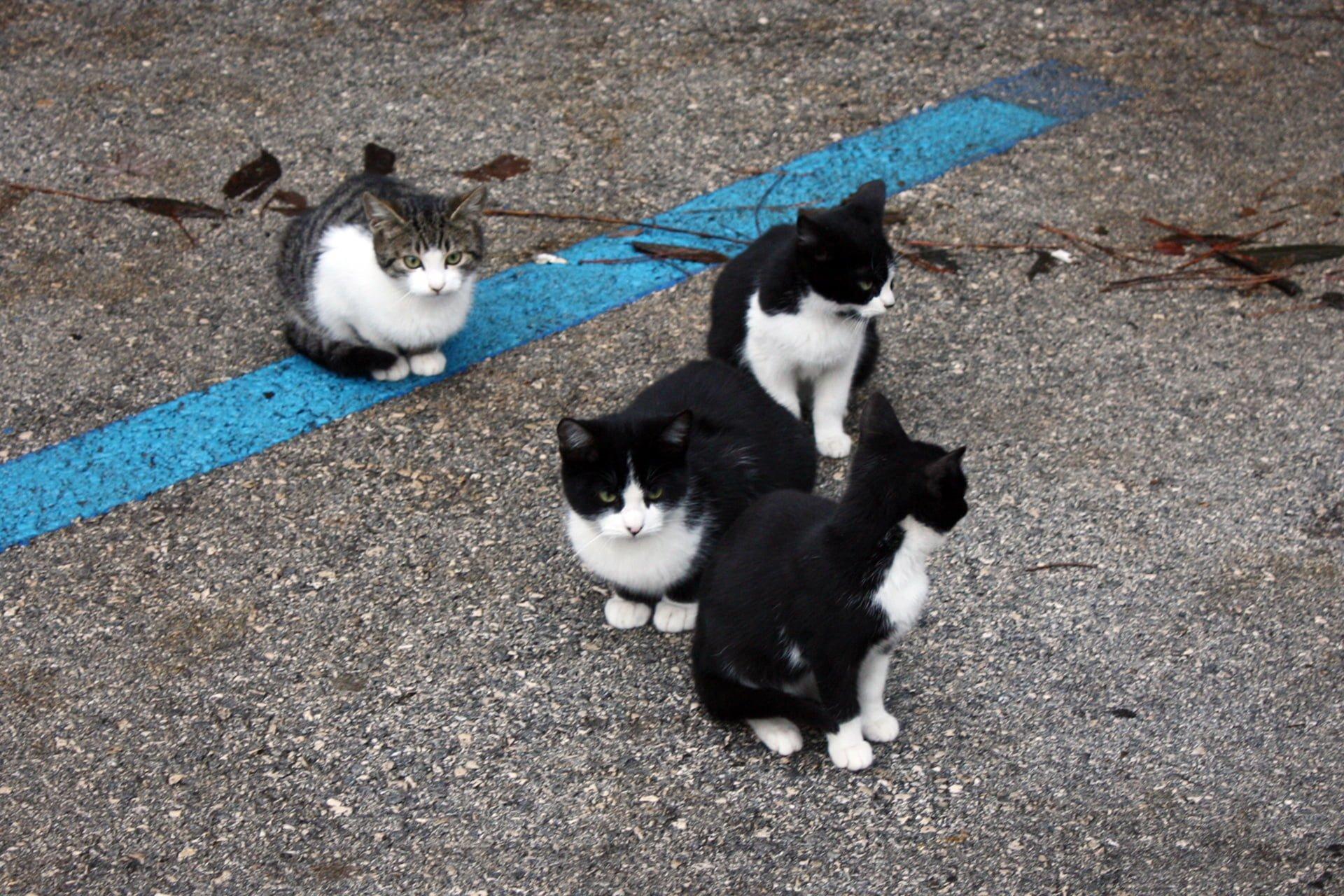 yavru kedi resimleri – 4