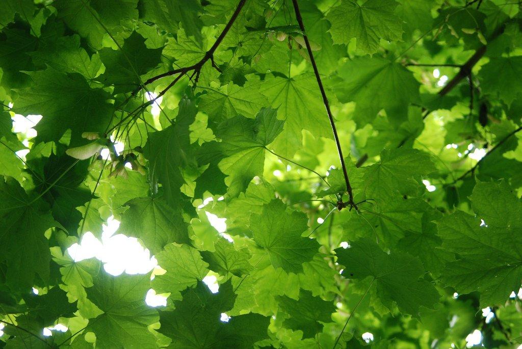 yeşil yapraklar ve dal