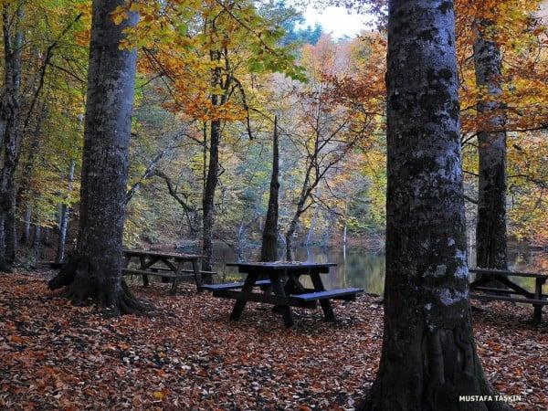 yedigöller ağaçlar ve tahta banklar