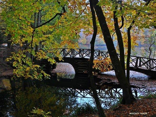 yedigöller - tahta köprü ve gölet