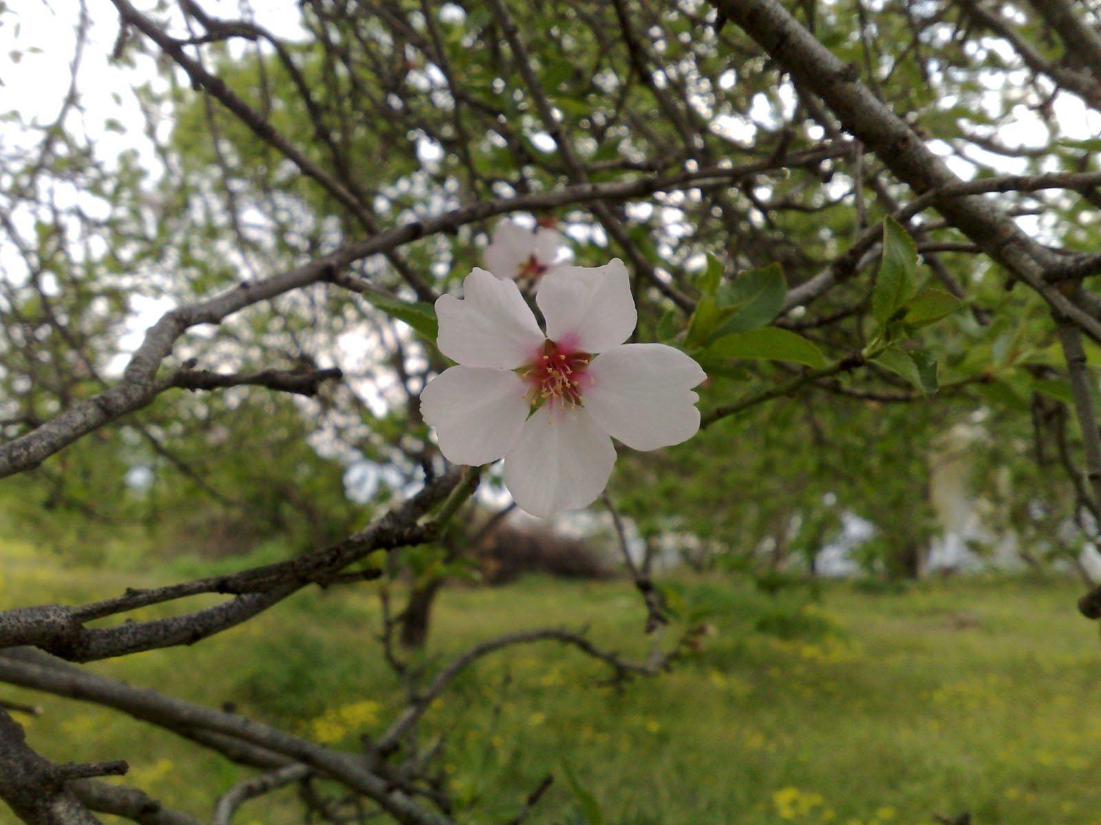 yolağzı köyünde bahar