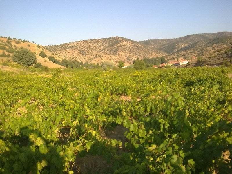 yozgat sarayözü köyü