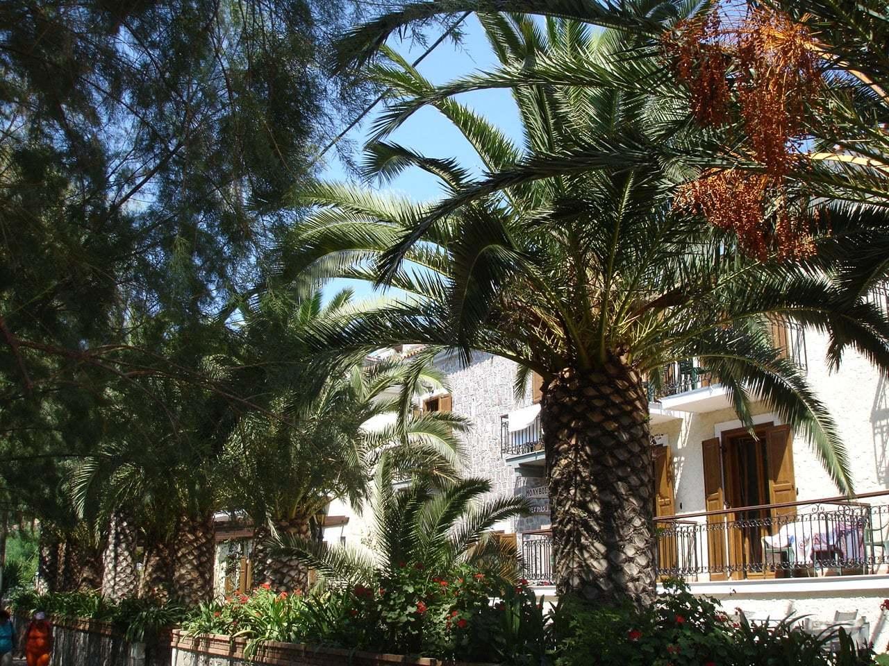 yunanistan palmiyeler