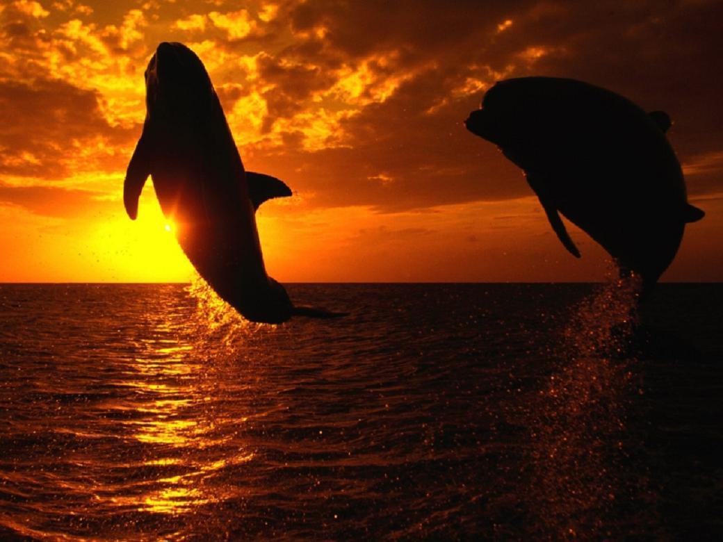 Yunus Balıklı Muhteşem Manzaralar