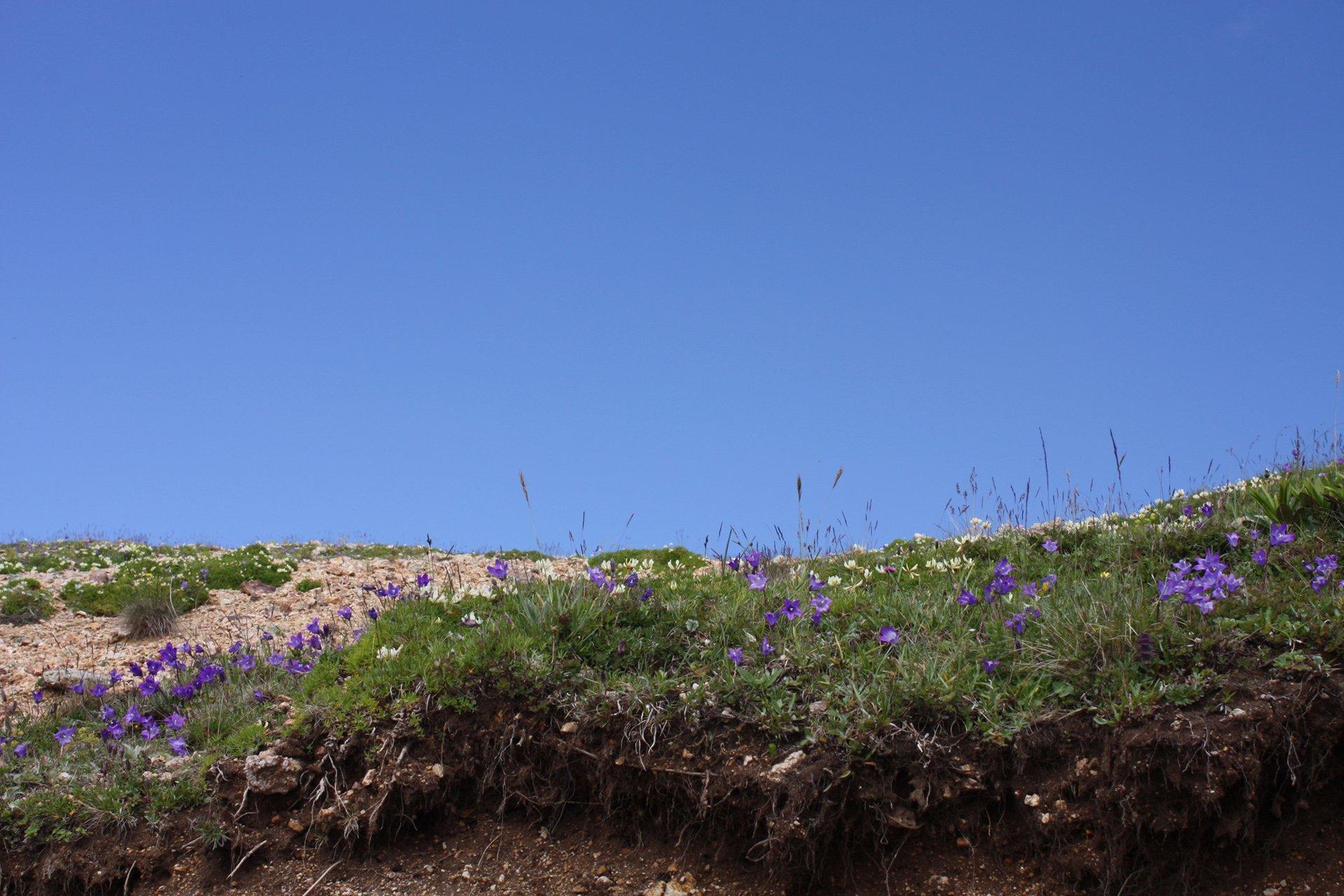 zarha dağı